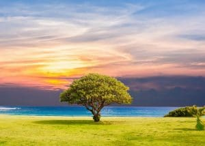 attrape rêve arbre de vie